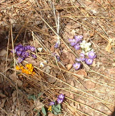 Firstflowers1