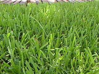 Grass_1